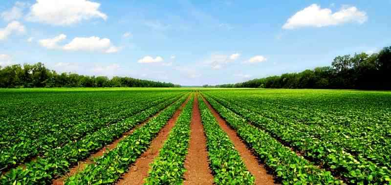 Agricultural Income Is It Taxable In India-What At First Was Plunder Is Now Tax - IndianMoney.com